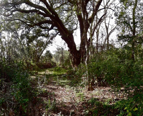 lynching_tree
